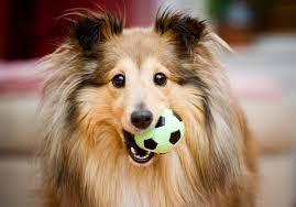 Asssurance chien